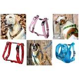 3. Выбор шлейки для собаки.