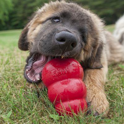 Kong Classic высокопрочная игрушка из литой резины для собак (фото, вид 2)