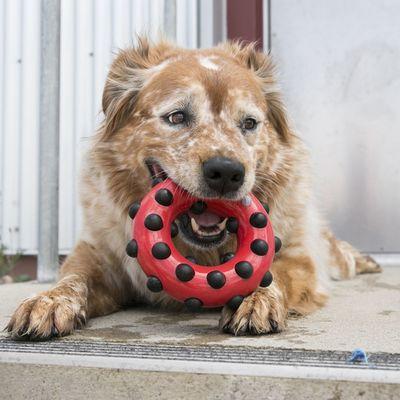 Kong Dotz игрушка для собак Квадрат (фото, вид 1)