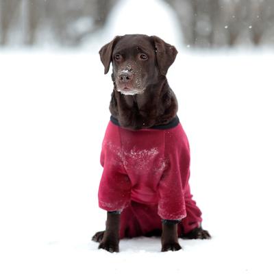 Osso комбинезон для собак из флиса NEW, для сук (цвет красный/бордо), ЗАСТЕЖКА МОЛНИЯ (фото, вид 4)