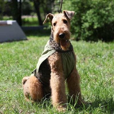 Охлаждающая попона для собак OSSO Fashion (фото, вид 3)