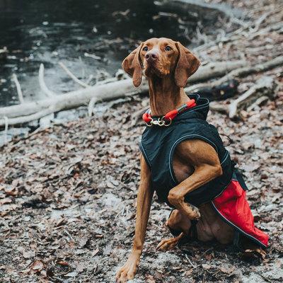 Hunter утепленная куртка со съемной флисовой подкладкой для собак Uppsala Allrounder, цвет антрацит/красный (фото, вид 2)