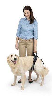 Solvit вожжи на задние конечности, для собак крупных пород, размер L (фото, вид 1)