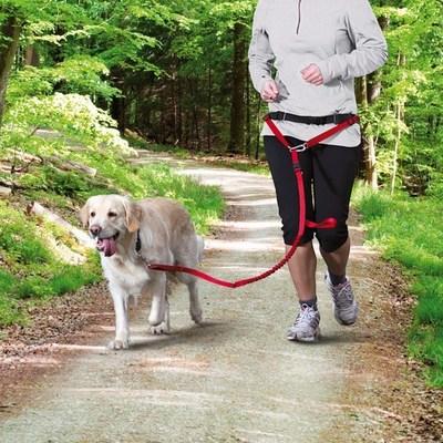 Trixie пояс для бега с собакой с поводком для крупных пород, цвет красный (фото, вид 1)