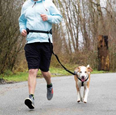 Trixie пояс для бега с собакой с поводком, цвет черный (фото, вид 2)