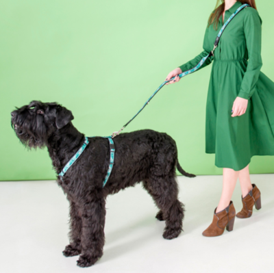 """Rogz поводок-перестежка для собак Fancy Dress """"Мятное настроение"""" (фото, вид 1)"""