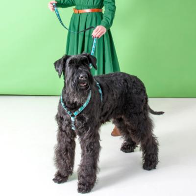 """Rogz поводок для собак Fancy Dress """"Мятное настроение"""" (фото, вид 1)"""