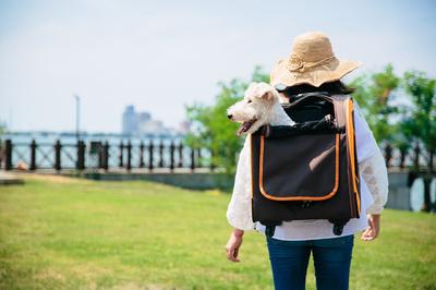 Ibiyaya многофункциональная тележка-трансформер (сумка-тележка-рюкзак) Liso для кошек и собак (Parallel Transport Pet Carrier), коричневая с оранжевым (Ибияйя) (фото, вид 6)