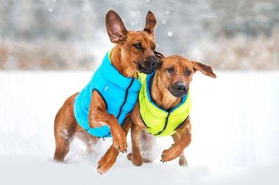 AiryVest куртка двухсторонняя для собак (Collar), цвет салатово-желтый (фото, вид 1)