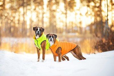 AiryVest куртка двухсторонняя для собак (Collar), цвет салатово-желтый (фото, вид 2)