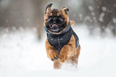 AiryVest куртка двухсторонняя для собак (Collar), цвет салатово-желтый (фото, вид 4)
