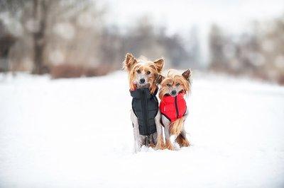 AiryVest куртка двухсторонняя для собак (Collar), цвет салатово-желтый (фото, вид 5)