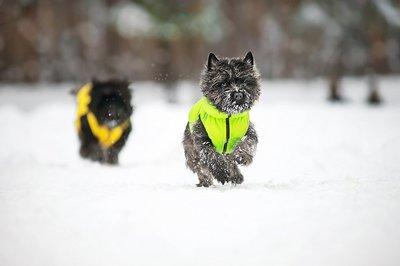 AiryVest куртка двухсторонняя для собак (Collar), цвет салатово-желтый (фото, вид 6)