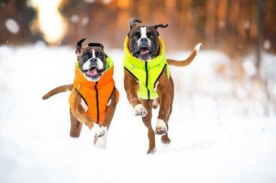AiryVest куртка двухсторонняя для собак (Collar), цвет салатово-желтый (фото, вид 8)