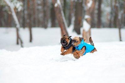 AiryVest куртка двухсторонняя для собак (Collar), цвет салатово-желтый (фото, вид 10)