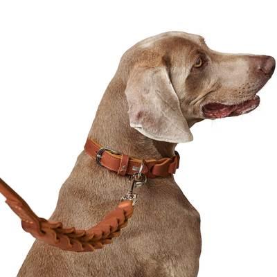 Ошейн Hunter Solid Education натуральная кожа, коричневый, размер 50, шея 34-42 см (фото, вид 5)