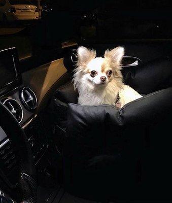 DogsCars Автокресло для перевозки собак в автомобиле, цвет черный, размер 50х50 см (фото, вид 6)
