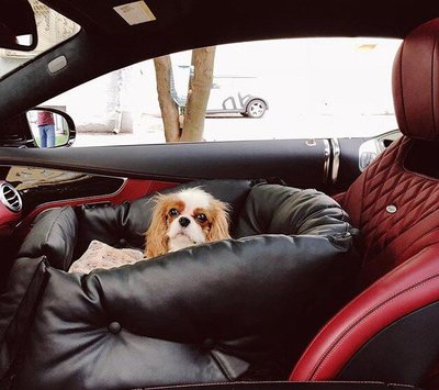 DogsCars Автокресло для перевозки собак в автомобиле, цвет красный (фото, вид 5)