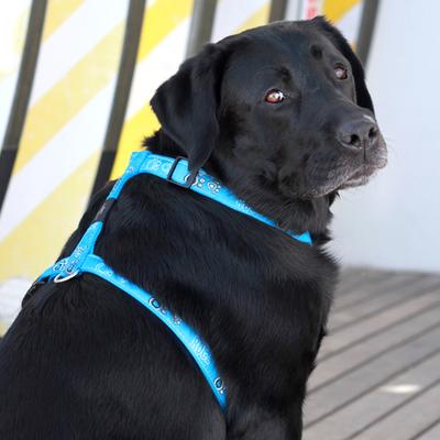 Rogz шлейка для собак Fancy Dress, цвет бирюзовый (фото, вид 1)