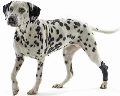Kruuse Rehab Hock Protection протектор скакательного сустава собаки (фото)