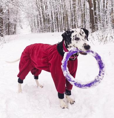 Osso комбинезон для собак из флиса NEW, для сук (цвет красный/бордо), ЗАСТЕЖКА МОЛНИЯ (фото)