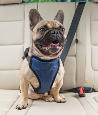 Solvit шлейка для перевозки собаки в автомобиле Deluxe Car Safety Dog Harness, размер M (фото)