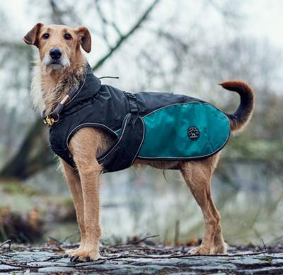 Hunter утепленная куртка для собак Uppsala Cozy, цвет антрацит/бирюзовый (фото)