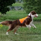 Osso Fashion Сигнальный жилет для собак