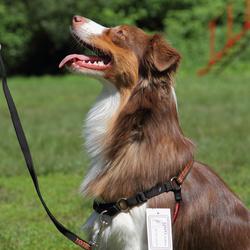 OSSO Fashion Шлейка корректирующая для собак