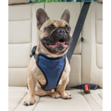 Solvit шлейка для перевозки собаки в автомобиле Deluxe Car Safety Dog Harness, размер M