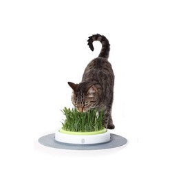 СКИДКА! Hagen сад с травкой для кошек Catit Design Senses