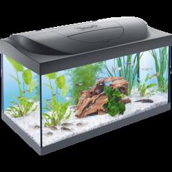 Tetra Starter Line LED аквариумный комплекс 54 л