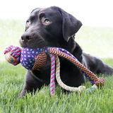 KONG Holiday игрушка для собак Вубба Медли 33 см